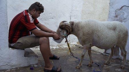 Bild 1 von Des moutons et des hommes