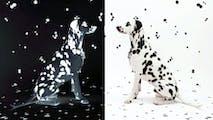 Image 1 de Wie die Kunst auf den Hund und die Katze kam