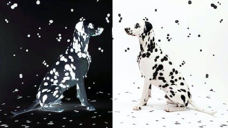 Bild 1 von Wie die Kunst auf den Hund und die Katze kam