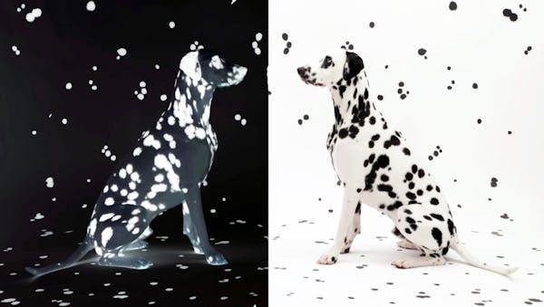 Wie die Kunst auf den Hund und die Katze kam - Entretien