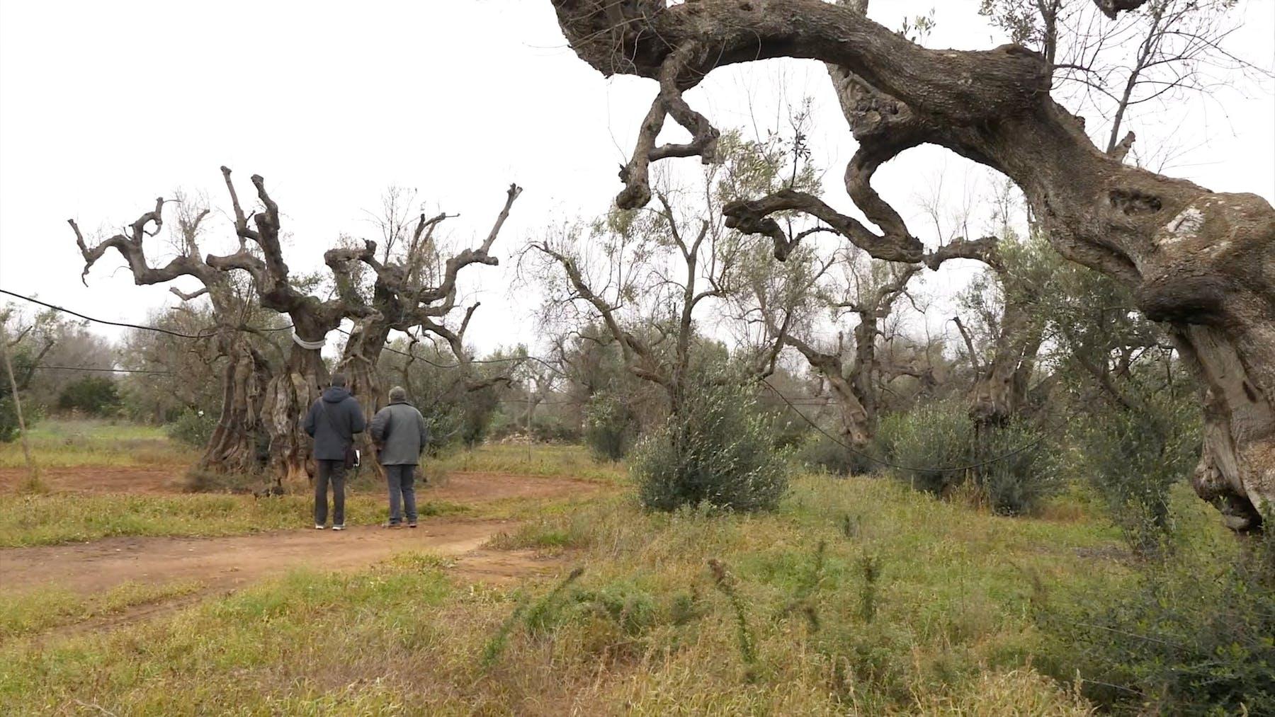 Image 1 de C'era una volta l'albero