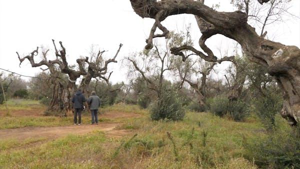 C'era una volta l'albero
