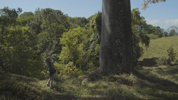 La Gyranthera – traces d'Henri Pittier explorateur